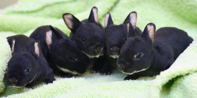 Edited_bunnies