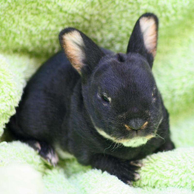 Edited bunnies 3